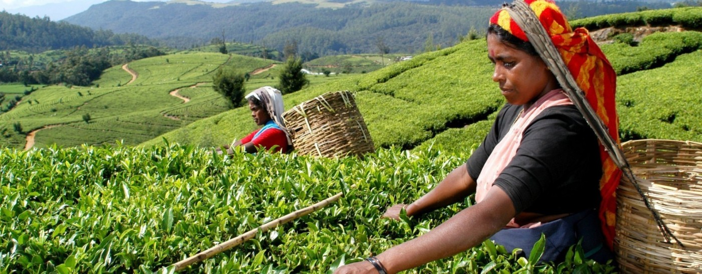 1481197169-tea-pickers-in-sri-lanka.jpg