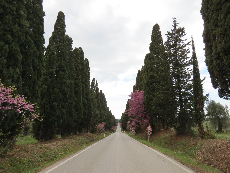 Bolgheri
